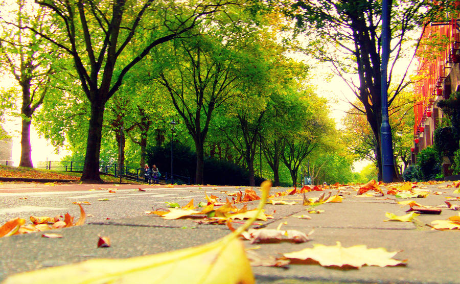 Autumn Leaves by frankcom