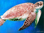 Ballpoint Pen Drawing of a Sea Turtle