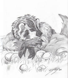 Badger with side of Mushrooms by sandrabong