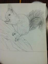 Red Squirrel Sketch - Side View by BurtanTae