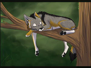 A good day's rest - by Fecu