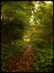 Down the Autumn Path