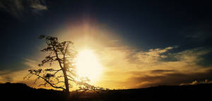 Sunset and a tree.