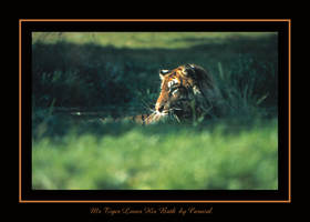 Mr Tiger Loves His Bath by caracal