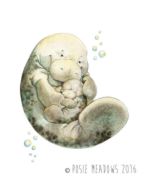 Manatee Cuddles by Shalladdrin