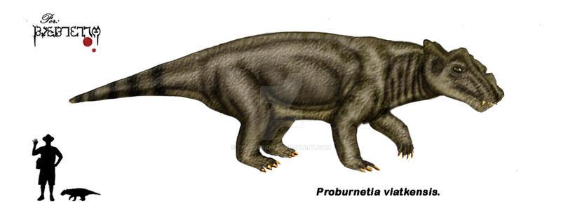 Proburnetia viatkensis by Theropsida