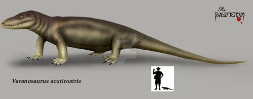Varanosaurus acutirostris