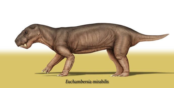 Euchambersia mirabilis