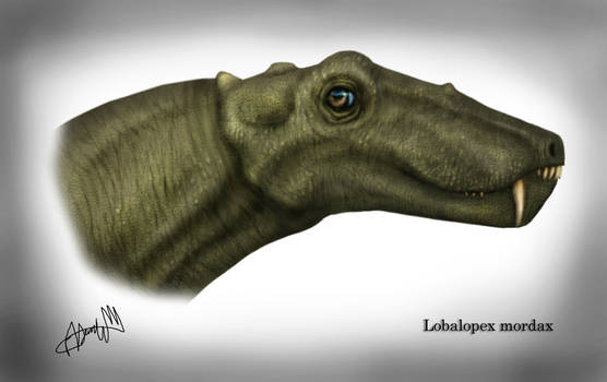 Lobalopex mordax2