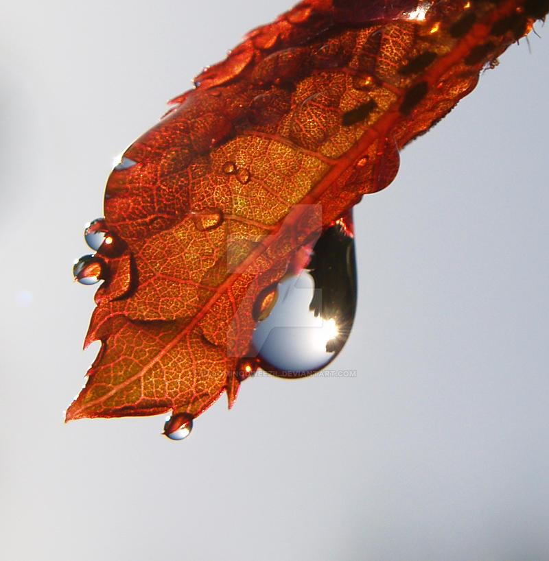 fall drips by palominodweezil