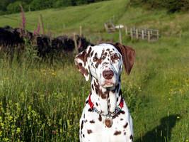 Penny in field