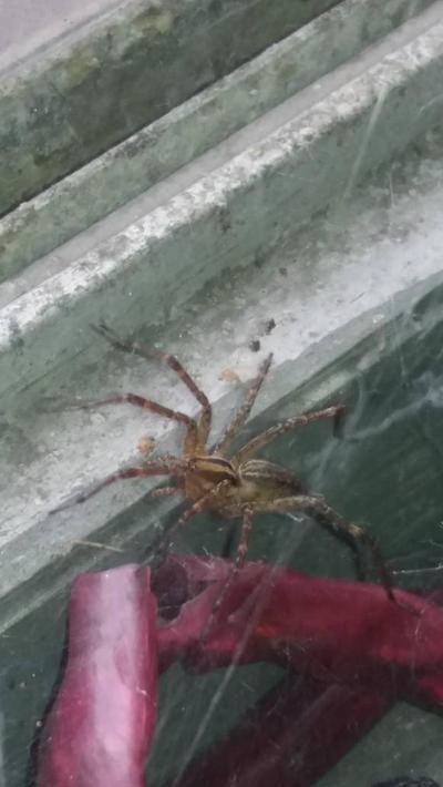 spider  by BruceHulkBanner
