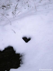 Natural heart in the snow