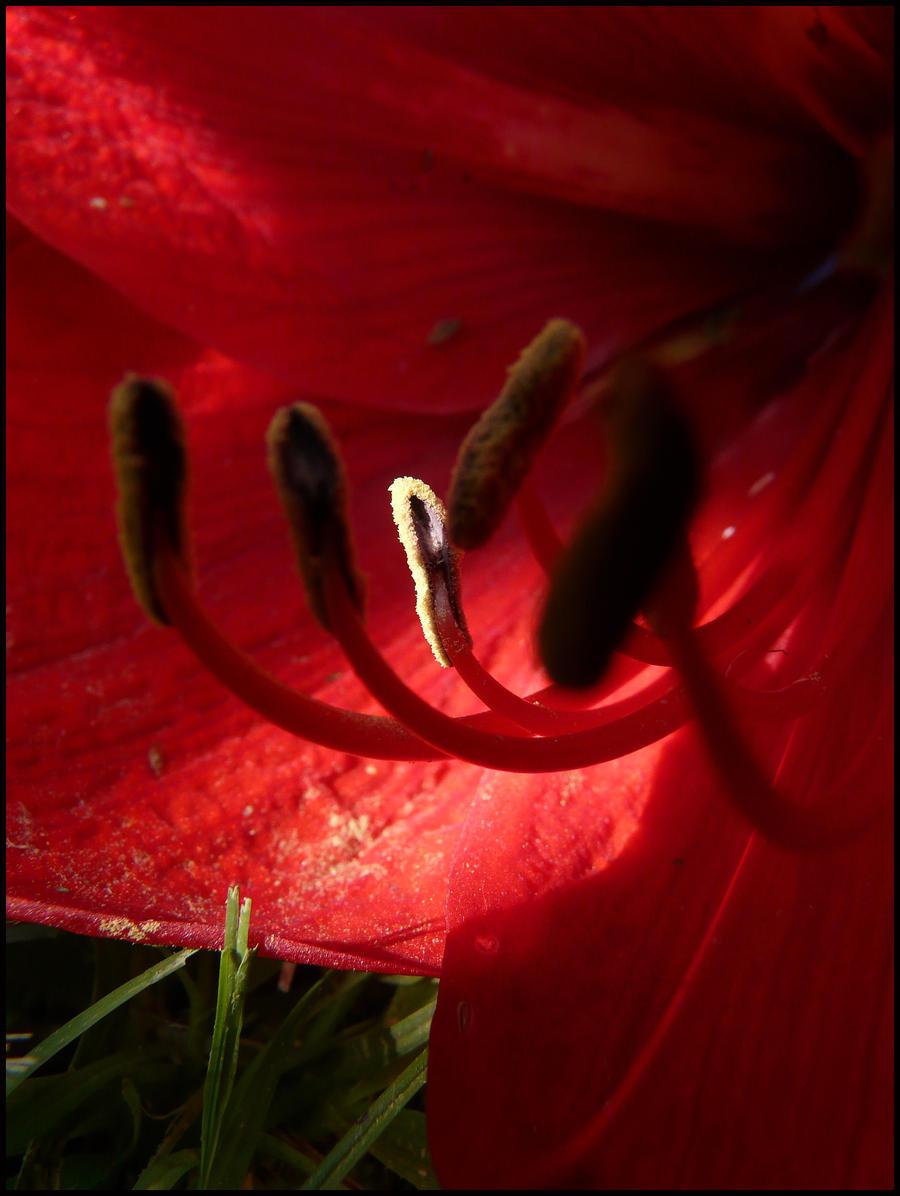 Fallen Flower by papatheo
