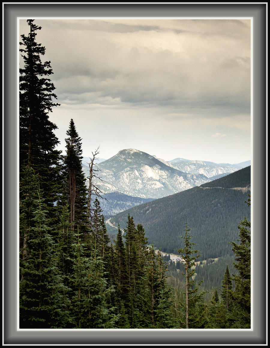 Trees in the Rockies by papatheo
