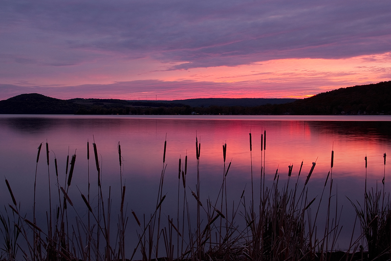 Cattails in the Gloaming by papatheo
