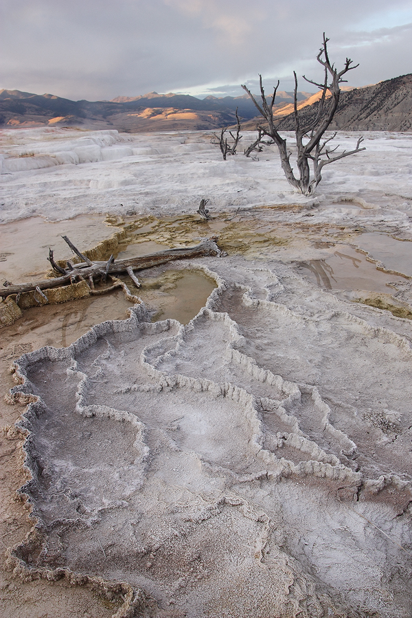 No Place for Trees by papatheo