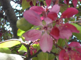 Return of Spring by itsayskeds