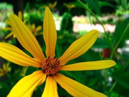 Yellow Flower by itsayskeds