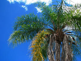 Palm and Sky by itsayskeds