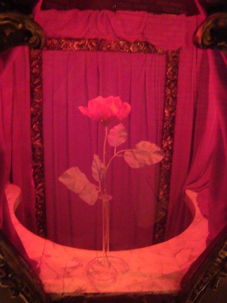Bloom by itsayskeds