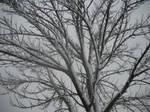 Snow Tree Four