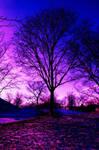Blues Skies and Tree