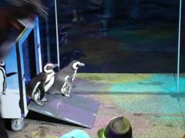 Penguins One by itsayskeds