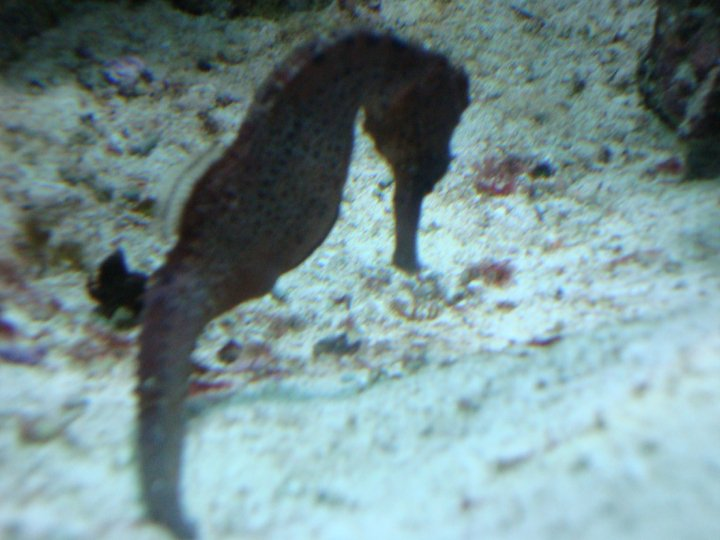 Seahorse Two by itsayskeds
