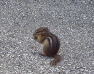 Chipmunk 3 by itsayskeds