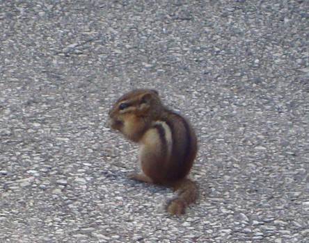 Chipmunk 3