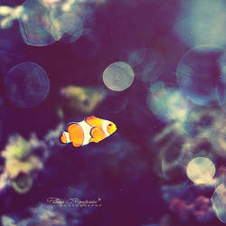 Nemo by LoMiTa