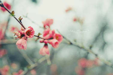 Spring is coming by LoMiTa