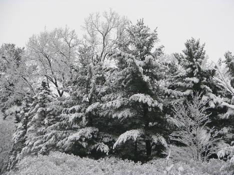 Winter Wonderland 10