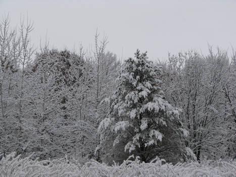 Winter Wonderland 14