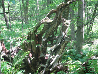 Nature's Sculpture