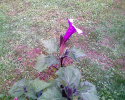 Gramma's Flower Three by miserychic