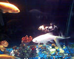 The Fishes