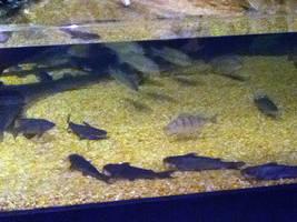 cleveland aquarium 01 by miserychic