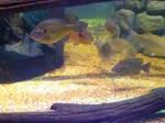 cleveland aquarium 02