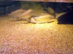 cleveland aquarium 04
