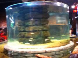 cleveland aquarium 08 by miserychic