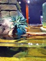 cleveland aquarium 09 by miserychic