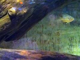 cleveland aquarium 10 by miserychic