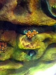 cleveland aquarium 21 by miserychic