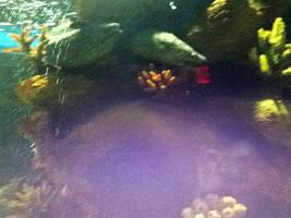 cleveland aquarium 22 by miserychic
