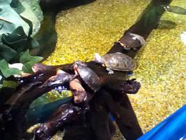 cleveland aquarium 28 by miserychic