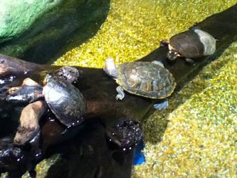 cleveland aquarium 29 by miserychic