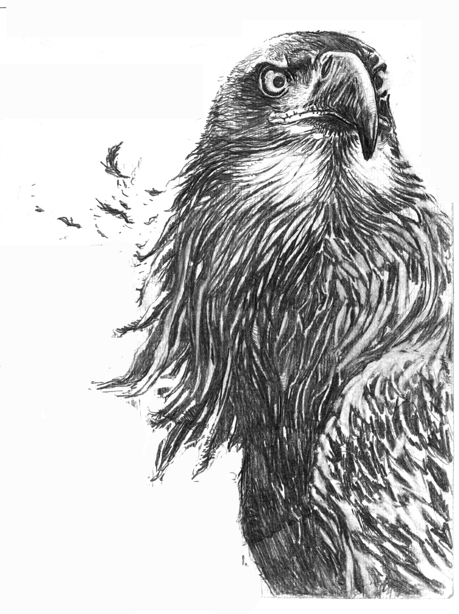 Eagle drawing by subicstevan eagle drawing by subicstevan