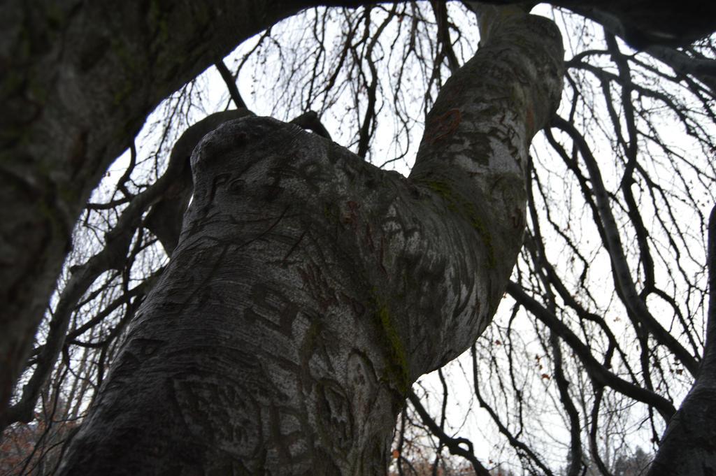 The Grafitti tree by jessamaciejewski